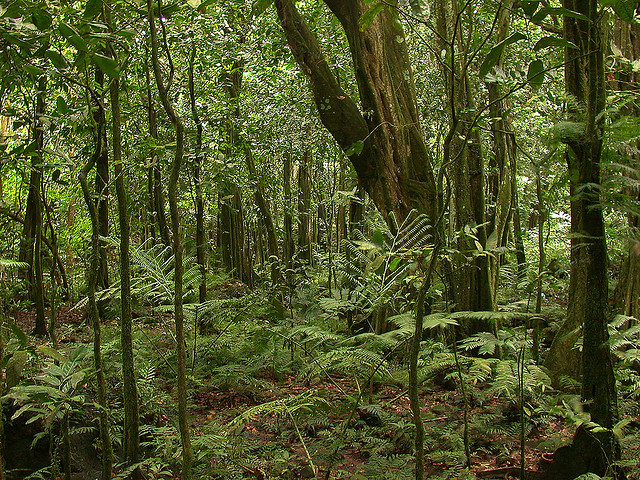 Rainforest on Mo'orea. Photo by Tim Waters, licensed under Creative Commons.