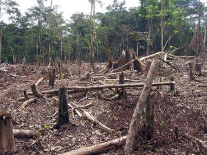 Slash and burn agriculture in the Amazon. Image by Threat to Democracy/Flickr. Licensed under Creative Commons license License.