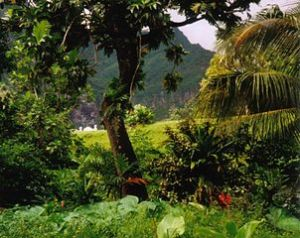 Rainforest, Fatu Hiva Island, French Polynesia. Image by Makemake at de.wikipedia, licensed under GNU version 1.2 or later.