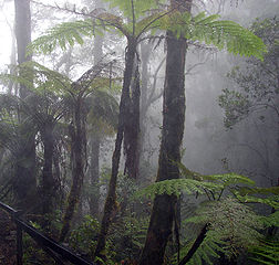 Cloud forest, Mount Kinabalu, Borneo. Licensed under Creative Commons 2.0