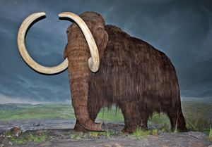 Woolly mammoth restoration at the Royal British Columbia Museum, Victoria, British Columbia. Image by WolfmanSF, licensed under Creative Commons 3.0