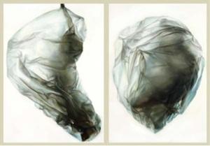 'Cocoons' by Gretta Planchon Allen, Finalist, Paintings, Waterhouse 2013.