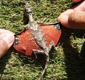 Tiny dragon found in Indonesia. No license information available.