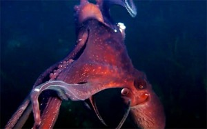 The octopus that stole Victor's camera. Screen grab from the video.