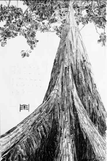 Tales From The Forest Teak Biodiversity Revolution