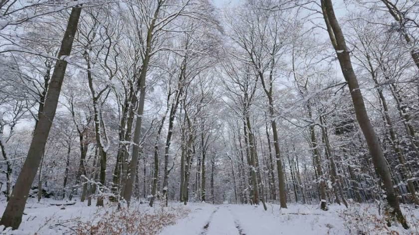 688323762-deciduousforest-snow-covered-rhineland-palatinate-stem